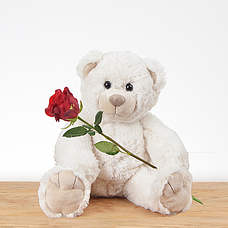 White teddy with red rose