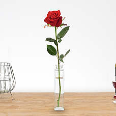 Single long stem red rose