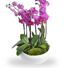 Orchid arrangement pink