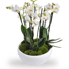Orchid arrangement white