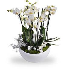 Kerst Orchidee arrangement