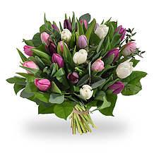 Pastel tulpen