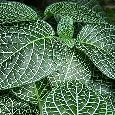 Plant groen of bloeiend