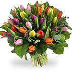 Tulpen en voorjaar
