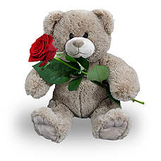 Teddy 25 cm with red rose