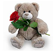 Bruine knuffel 35 cm + rode roos