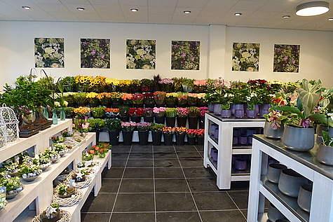 Detailfoto 2 Van Beest Bloemen en Planten Zeist