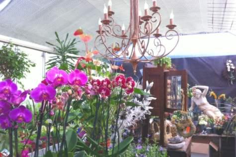Detailfoto 2 Bloemenhuis Margriet