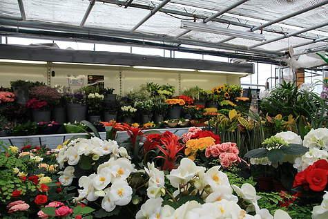 Detailfoto 2 Tuincentrum M. v.d. Berg B.V.