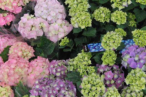 Detailfoto 5 Rosario-bloemen