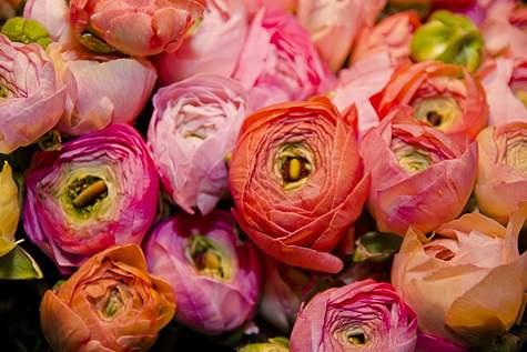 Detailfoto 3 Bon Bon Fleur