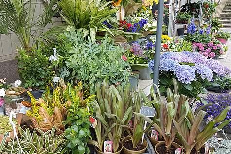 Detailfoto 3 Amstel Flowers